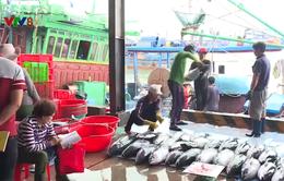 Khánh Hòa: Chuyến biển đầu năm đạt sản lượng cao