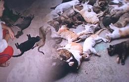 Khẩn trương điều tra hiện tượng mèo chết hàng loạt nghi bị đầu độc