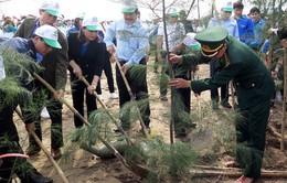 Nam Định: Trồng gần 3.000 cây xanh ven bờ biển