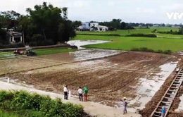 Sao Thần nông: HTX nông nghiệp thu hàng trăm tỷ đồng mỗi năm