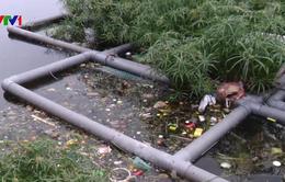 """Ô nhiễm nghiêm trọng tại dự án """"treo"""" công viên Tuổi trẻ"""