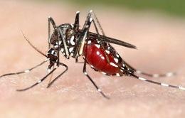Làm gì để phòng chống bệnh sốt rét?
