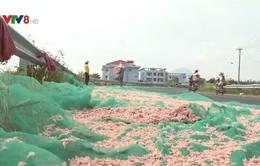 Phơi ruốc trên đường - Nguy cơ mất an toàn vệ sinh thực phẩm