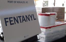 Mỹ thu giữ lượng fentanyl lớn nhất từ trước tới nay