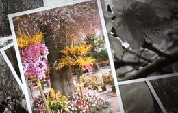 Lễ hội hoa anh đào 2019 sắp diễn ra tại Hà Nội