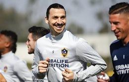 Zlatan Ibrahimovic quyết tâm phá mọi kỷ lục ở MLS