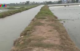 Hoàn thành lấy nước sản xuất vụ Đông Xuân