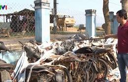 Khó bán thanh lý hàng trăm xe máy chở gỗ lậu