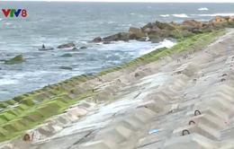 Đâu là giải pháp tối ưu bảo vệ bờ biển Cửa Đại – Hội An?