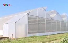 Trải nghiệm mô hình rau thủy canh hữu cơ
