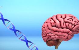 Việc chỉnh sửa gene có thể làm tăng khả năng trí não của con người