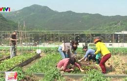 Nông sản tươi Hàn Quốc chuẩn bị tràn vào thị trường ASEAN