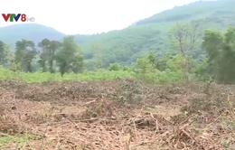 Thừa Thiên Huế: Nguy cơ cháy rừng do đốt thực bì