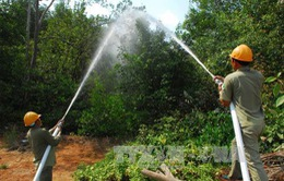 Lâm Đồng tăng cường quản lý bảo vệ rừng trong mùa khô