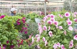 Nghệ nhân trẻ tạo dựng làng nghề hoa cây cảnh