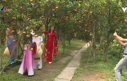 Quýt hồng Lai Vung đón khách du Xuân