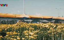 Không khí chợ hoa Xuân ngày cuối năm