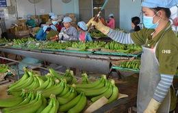Đưa Việt Nam vào top 10 về chế biến nông sản của thế giới