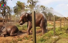 Việt Nam nỗ lực bảo vệ rừng và động vật hoang dã