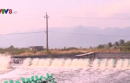 Khánh Hòa: Nhiều hộ dân lo lắng khi bước vào vụ nuôi trồng thủy sản