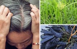 Chữa tóc bạc sớm tại nhà bằng nguyên liệu thiên nhiên chưa bao giờ dễ dàng đến thế