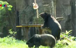 Những người chăm sóc động vật ở Thảo Cầm Viên
