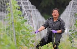 """VTV Đặc biệt: """"Chông chênh"""" phận làm dâu của hàng trăm phụ nữ Việt tại Đài Loan"""