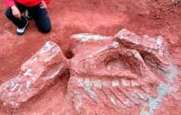 Phát hiện nhiều hóa thạch xương khủng long tại Chile