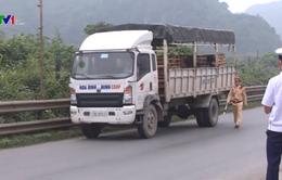 Vận chuyển lợn qua Thanh Hóa giảm 70%