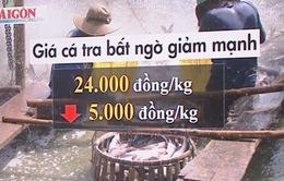 """Giá cá tra chìm nổi vì tâm lý """"ăn xổi"""""""