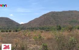 Cảnh báo cháy rừng cấp nguy hiểm ở đồng bằng sông Cửu Long