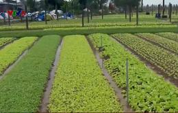 Thừa Thiên Huế: Nông dân không mặn mà làm rau sạch