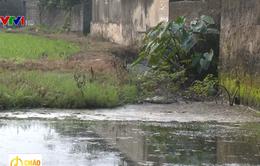 Trang trại chăn nuôi gia súc xả thải bức tử dòng sông ở Hưng Yên