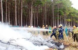 Tây Nguyên và Nam Bộ đứng trước nguy cơ cao xảy ra cháy rừng