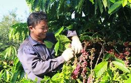 Nhiều dư địa để tăng giá trị cà phê Việt