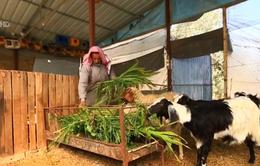 Tận dụng phế phụ phẩm trong nông nghiệp ở dải Gaza