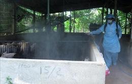 Bến Tre: Siết chặt kiểm soát dịch tả lợn châu Phi