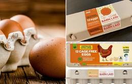 Australia thu hồi hàng trăm nghìn quả trứng do lo ngại nhiễm khuẩn salmonella