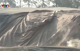 Đà Nẵng: Bãi chứa than gây ô nhiễm, người dân kêu trời