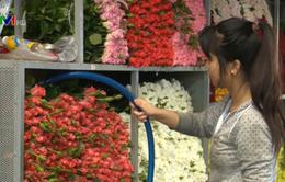 Nghịch lý vùng trồng hoa Đà Lạt