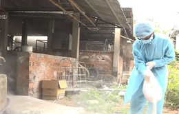 Bà Rịa - Vũng Tàu: Ngăn chặn tình trạng tuồn lợn bệnh ra các chợ