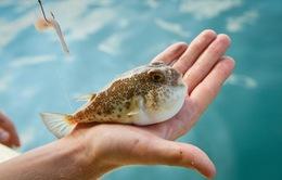 7 loại cá mà bạn nên hạn chế ăn