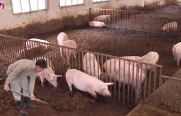 Cần hợp tác để hướng tới phát triển chăn nuôi chuyên nghiệp