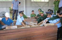 Hải quan Đà Nẵng bắt giữ lô hàng khối lượng lớn nghi là ngà voi