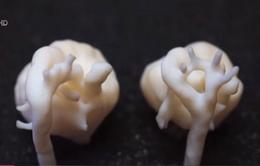 Anh tạo thành công hình ảnh 3D tim thai nhi