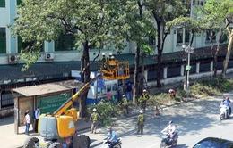 Hà Nội: Cắt sửa hơn 20.000 cây nguy hiểm trước mùa mưa bão