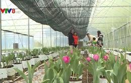 Nông nghiệp công nghệ cao đưa nông sản xứ lạnh đến Huế