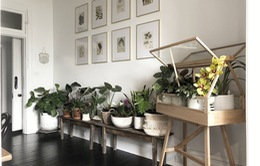 Cải thiện không gian bằng cách đưa thiên nhiên vào nhà