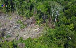 Rừng Amazon bị tàn phá nghiêm trọng