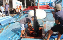Xây dựng nghề cá có trách nhiệm